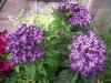 Huszti Kertészet, Velence