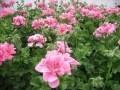 Huszti kertészet