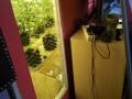 Kábítószer termesztőt fogtak a rendőrök Velencén! - fotók, videó