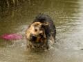 Térképen, hogy hol lehet kutyát fürdetni a Velencei-tóban!